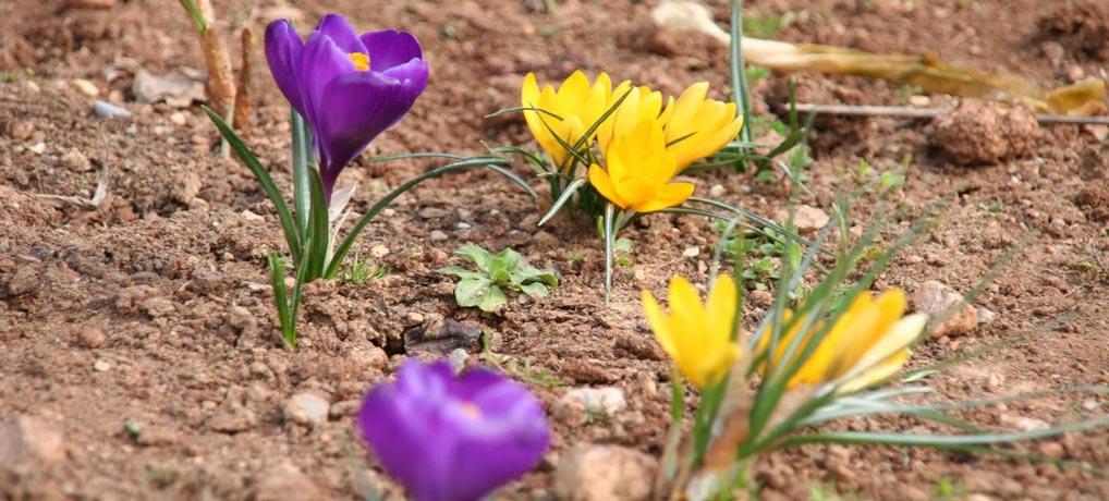 Φυτική Διάπλαση της Βλάστης… και περί Διατροφής